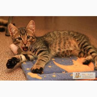 Красивые, милые, добрые и нежные котята срочно ищут дом!