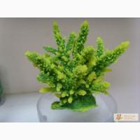 Искуственные кораллы, Актинии SH 059