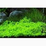 Аквариумные растения для небольших и нано аквариумов