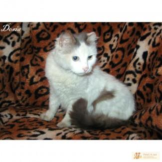 Кошка-фретка