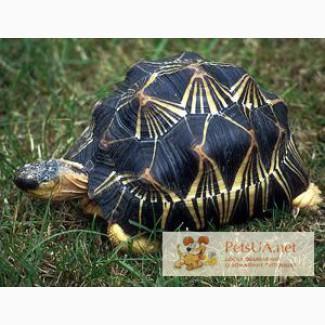 Черепаха станет Вам настоящим другом