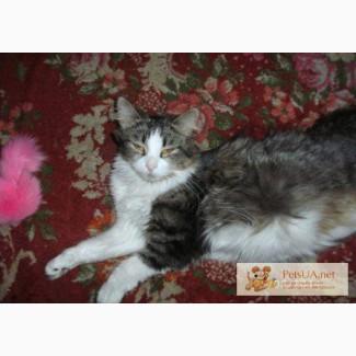 Норвежская лесная кошка родила 5 котят - котята ищут верных и добрых друзей-хозяев
