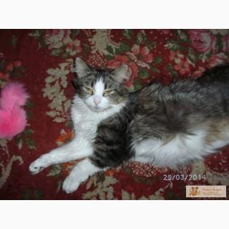 Наша кошечка норвежская лесная родила котят - котята ищут доброго и верного друга