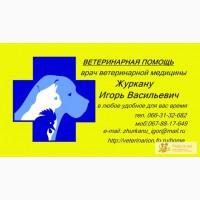 Ветеринарные услуги Круглосуточно