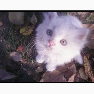 Котёнок бесплатно