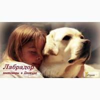 Интернет-магазин зоотоваров в Донецке