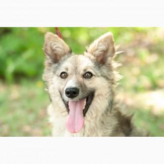 Отдам в хорошие руки молодую собаку Бєкки