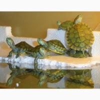 Черепахи – одни из самых древних рептилий, которые обитают на Земле
