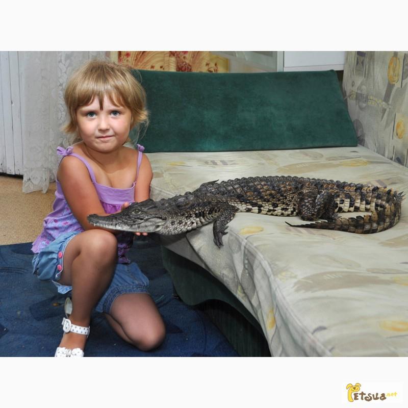 Фото 2/3. Крокодил (Нильский 110 см.)