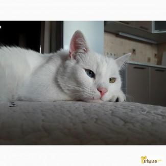 Отдам в добрые руки кота с разными глазами по кличке Кот