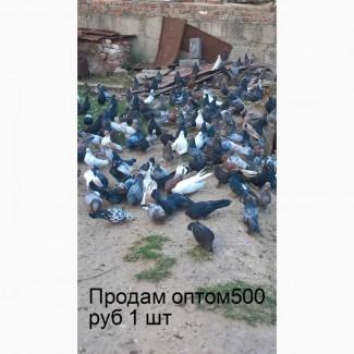 Продам оптом мраморных Николаевских голубей Масти:мраморные