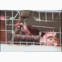 Клеточное оборудование для выращивания ремонтного молодняка кур-несушек – ОАРМ-5