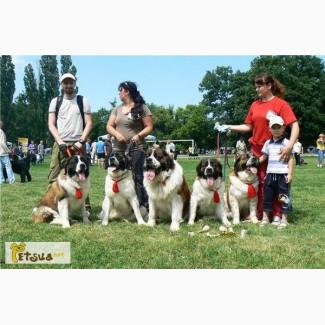 Московская сторожевая, щенки от самой титулованной собаки в Украине