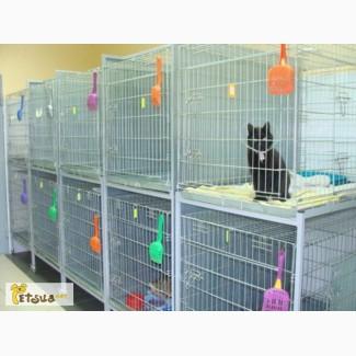 Передержка кошек на время течки или отпуска