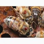 Варотом для защиты пчел