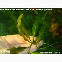 Красивые растения для аквариума
