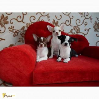 Диванчики, лежаки для собак, выставочные ринговки