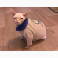 Одежда для котов сфинксов
