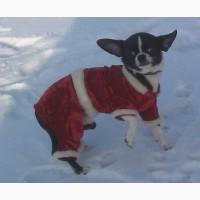 Новогодний костюмчик для маленькой собаки