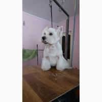 Стрижка грумінг собак у Дрогобичі