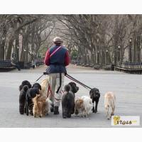 Выгул собак Днепропетровск