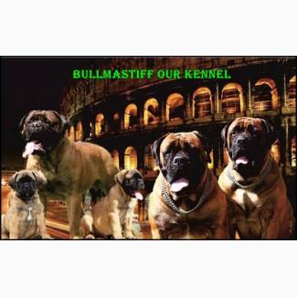Продажа высокопородных щенков бульмастифа