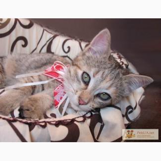 Милый котенок для самой доброй и любящей семьи!