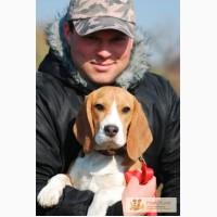Дрессировка собак в Харькове и Чугуеве