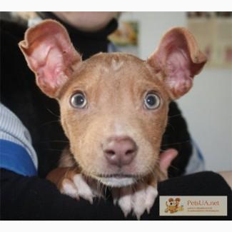 Джерри - супер-пупер щенок!