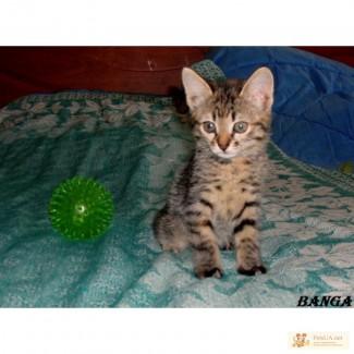 Лекарство от скуки – котенок Банга