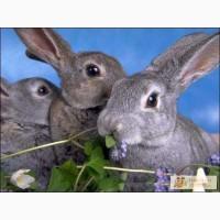 Комбикорма для страусов,уток,кроликов,св иней
