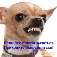 Социализация и коррекция проблемного поведения собак Решение проблем в поведении