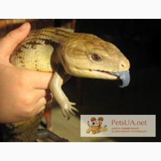 Динозаврики в миниатюре – В Год Динозавра