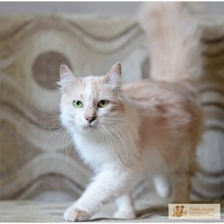 Aнгел, а не кошка! Ангорская красота!