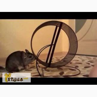 Беговое колесодля шиншиллы, белке, крыске и т.п