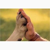 Вызов вет. врача на дом, Ветеринарная помощь Днепр