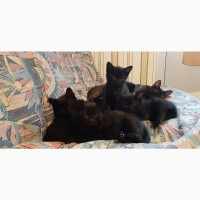 Веселі кошенята шукають доброго та відповідального господаря