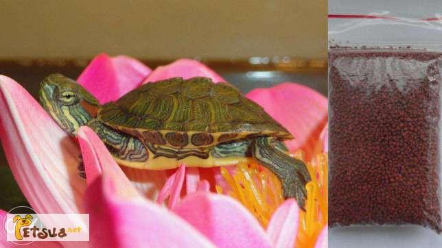 Фото 1/4. Красноухая черепаха заказывайте прямо сейчас с доставкой