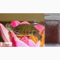 Красноухая черепаха заказывайте прямо сейчас с доставкой