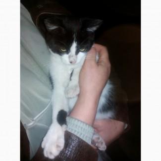Котик ищет заботливые руки