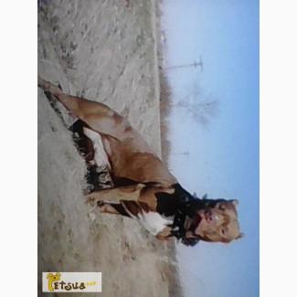 Продам щенков АПБТ. питбультерьер