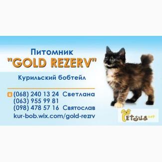 Настоящие котята курильского бобтейла