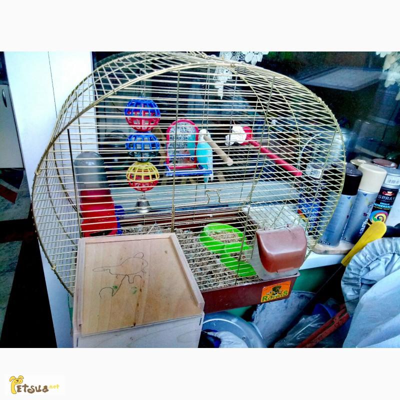 Фото 1/1. Отдам в хорошие руки валнистого попугая и мышку таню они друзья