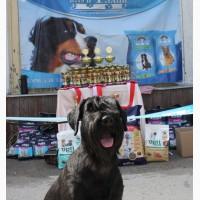 Всеукраинская ВЫСТАВКА собак, продажа щенков