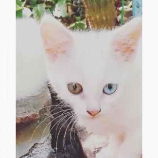 Котёнок као мани