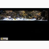 Объемные фоны для аквариумов