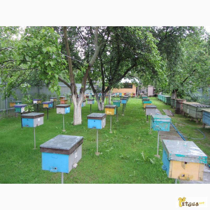 Фото 2/2. Бджоломатки Карпатка