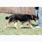 Динара, восьмимесячная стерилизованная собака среднего размера