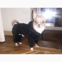 Одежда для маленьких собак. Комбинезон черный велюр