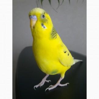 Передержка мелких птиц и пр. животных